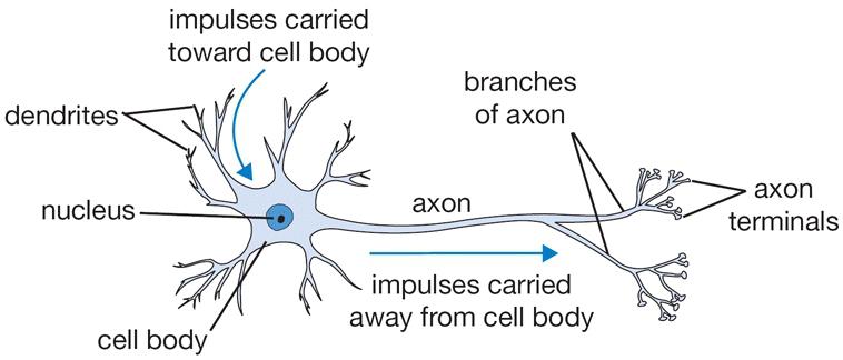 Mạng nơ-ron nhân tạo